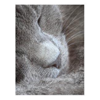 Gatito lindo el dormir postal