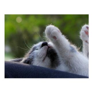 Gatito lindo el dormir tarjetas postales