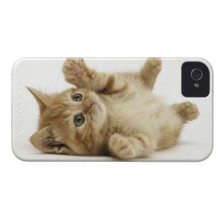 Gatito lindo iPhone 4 cárcasa