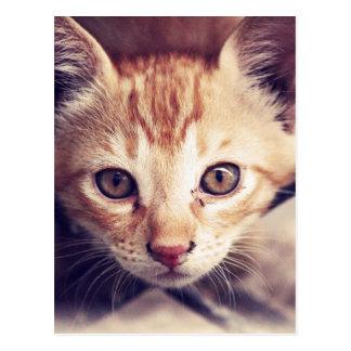 Gatito lindo que le mira postal