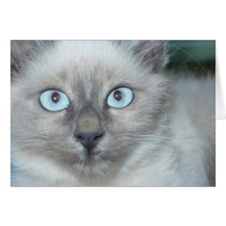 Gatito lindo tarjeta