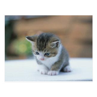 Gatito lindo tarjetas postales