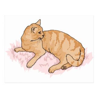 gatito postal