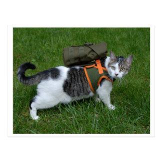 Gatito que acampa postal