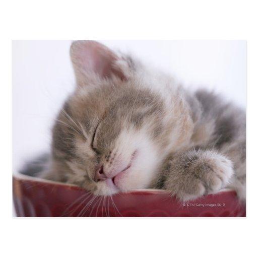 Gatito que duerme en el cuenco 2 postal