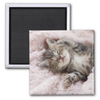 Gatito que duerme en la toalla imán