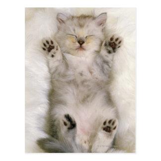 Gatito que duerme en una alfombra mullida blanca, postal