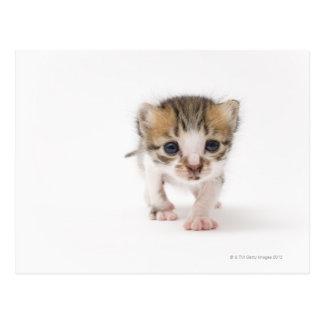 Gatito recién nacido postal