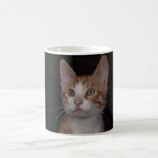 Gatito rojo - gato joven, fondo negro taza de café