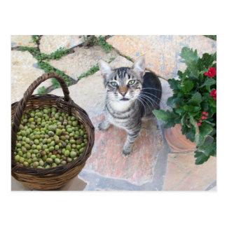 Gatito salvaje Giannino del gato con el pecho Postal