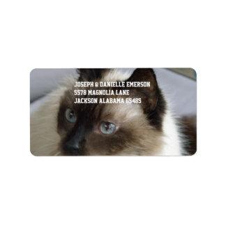 Gatito siamés etiqueta de dirección