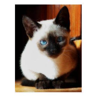 Gatito siamés postal