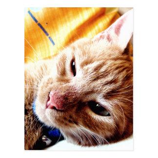 Gatito soñoliento postal
