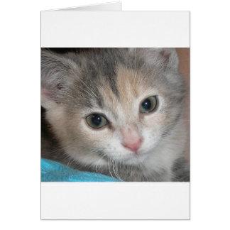 gatito tarjeta de felicitación