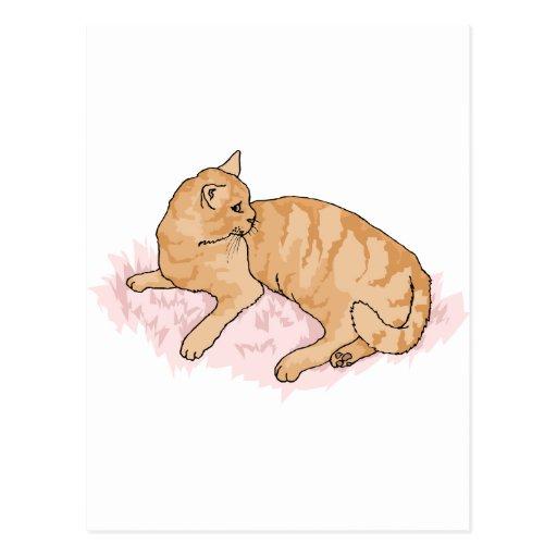 gatito postales