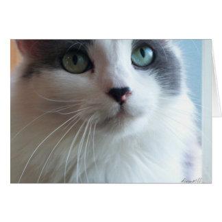 Gatito triste con los ojos tristes tarjeta de felicitación