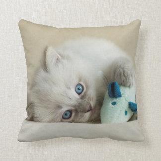 gatito viejo de Ragdoll de 6 semanas Cojín Decorativo