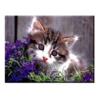 Gatito y violetas postal