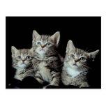 Gatitos adorables postales