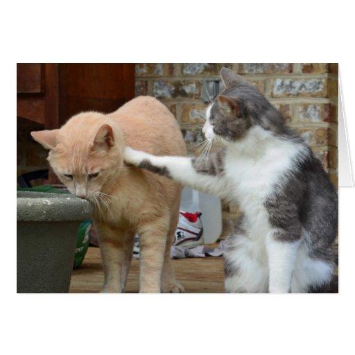 Gatitos de la consolación tarjetas