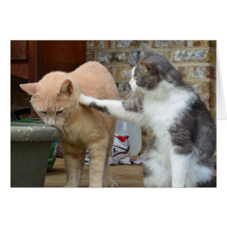 Gatitos de la consolación tarjeta pequeña