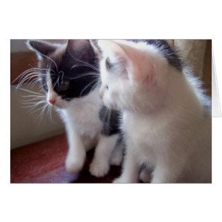 gatitos del bebé felicitación