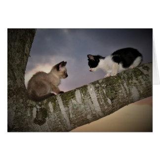 Gatitos del duelo tarjeta de felicitación