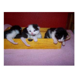 gatitos en caja postal