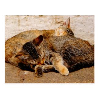 Gatitos gemelos postal