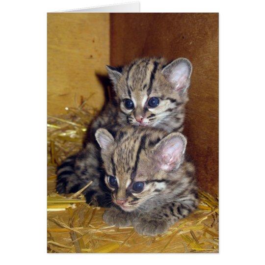 Gatitos margay de la postal tarjeta de felicitación