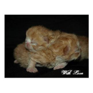 Gatitos persas recién nacidos adorables postal