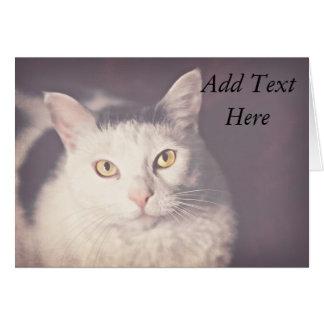gato Amarillo-observado Tarjeta Pequeña