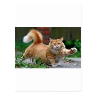 Gato anaranjado gordo grande postal