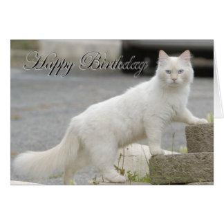 Gato blanco con feliz cumpleaños tarjeta de felicitación
