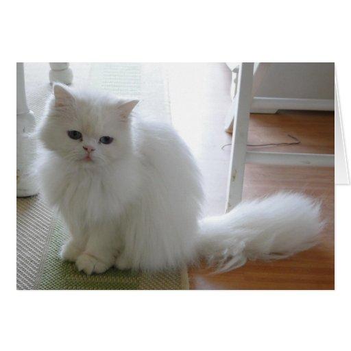 Gato blanco: Cumpleaños de Purrrfect Felicitaciones