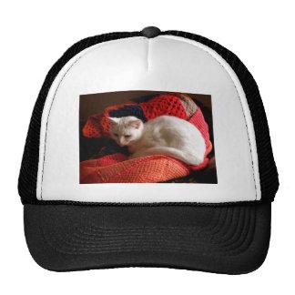gato blanco en la manta roja del punto del ganchil gorros
