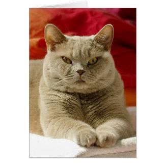 Gato británico del shorthair de la lila tarjeta de felicitación