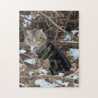 Gato de Coon de Maine en rompecabezas del bosque