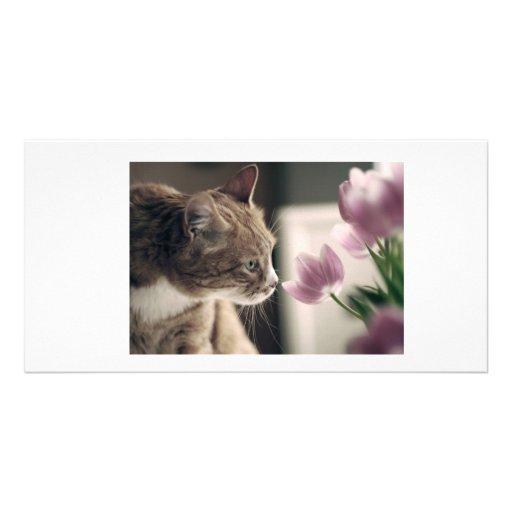 Gato de la primavera plantilla para tarjeta de foto