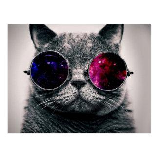 gato de las gafas de sol postal