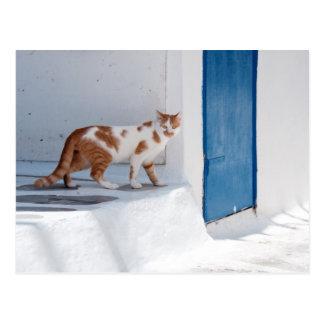 Gato de Mykonos - postal