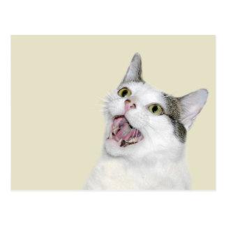 Gato de risa postal