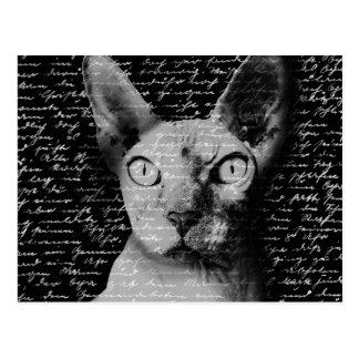 Gato de Sphynx Postal