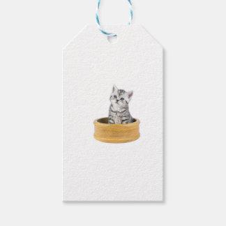 Gato de tabby de plata joven que se sienta en etiquetas para regalos