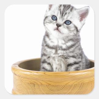 Gato de tabby de plata joven que se sienta en pegatina cuadrada