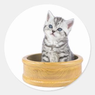Gato de tabby de plata joven que se sienta en pegatina redonda