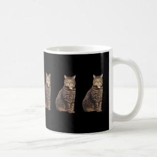 Gato de Tabby en fondo negro Taza De Café