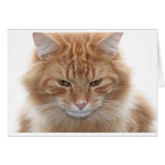 Gato de Tabby pelado naranja Tarjeta De Felicitación