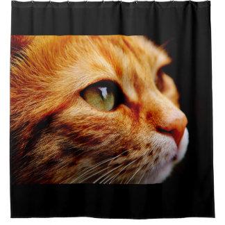 Gato de tigre anaranjado