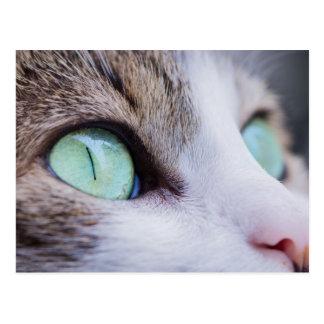 Gato de tigre gris con los ojos verdes claros postal